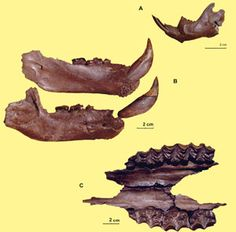 10 ellesmere island canada one world pinterest ellesmere ellesmere island pliocene fossils the canadian encyclopedia sciox Choice Image