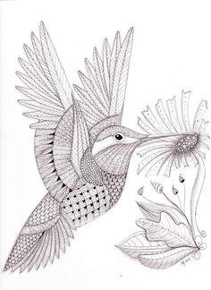 Tangled Hummingbird web | Flickr - Photo Sharing!