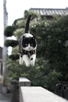 black and white cat || I believe I can fly LOL