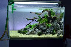 Discus Aquarium, Tropical Fish Aquarium, Aquarium Setup, Tropical Fish Tanks, Aquarium Design, Aquarium Fish Tank, Planted Aquarium, Freshwater Aquarium, Aquarium Landscape
