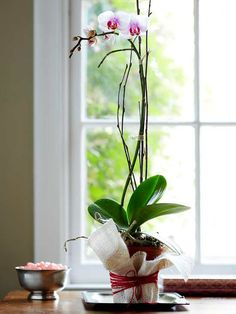 Decorative Orchid Flowerpot - This pretty flower makes an easy gift for a friend or valentine to put in their window. Wrap the pot with a square of burlap large enough to surround it, and pull threads from each side to create a fringed effect. Tie the burlap in place with red crochet thread to add a sweet touch