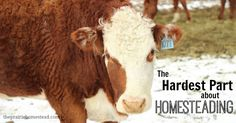 The Hard Part of Homesteading: thoughts on eating animals that you've raised...