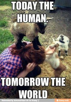 Goatie