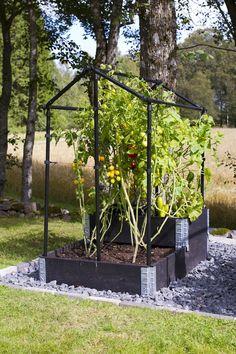 Växthus för pallkrage eller friland - Klostra