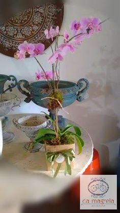 Orquídea Phalaenopsis c/ cachepot de papel quadrado grafite...um lindo presente!!!🎁🎁🌸🌸 Da Magrela Paisagismo Fone (18) 3222-4280  Whats (18) 99710-7731