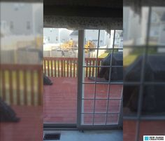 Before and After Add window grids add-on window grilles snap-in french door grids patio door grids. & How to add window grids window grilles french door grids patio ... pezcame.com