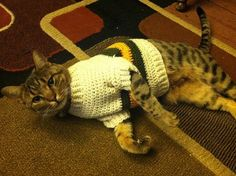 """Kimberly Ann Near: """"Christmas sweater for Thor, my Bengal cat. I didn't have a pattern, exactly, since it is custom fit... I followed this t..."""