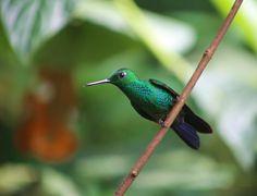 Hummingbird in Costa Rica