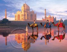 The Luxury Tour Packages in India- Take Help of Trip Planners Great Photos, Cool Pictures, India Pic, Taj Mahal, India Tour, Travel Companies, Travel Planner, India Travel, Indie