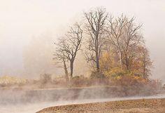 Misty Morning by Marcia Colelli