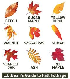 Leaf identification Guide | Nature Art Journal