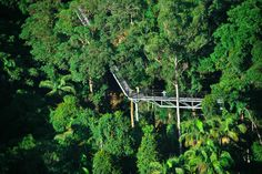 Tamborine Rainforest Skywalk  / Tamborine Mountain is a 28 square kilometres (11 sq.mi) plateau (8 km long by 4 km wide) in the Scenic Rim, Gold Coast Hinterland, south-east Queensland, Australia.