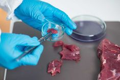 Buy Food safety by microgen on PhotoDune. Quality control expert inspecting at meat in the laboratory Petri Dish, Microbiology, Food Safety, Stock Photos, Dishes, Meat, Biotechnology, Protein, Photographs