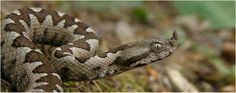 Φίδια: Πότε ξυπνάνε και τι ώρες είναι δραστήρια.