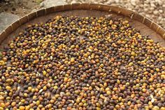 Coffee Beans Drying Under the Sun