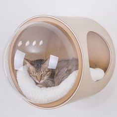 Spaceship Cat Bed Collection Turns Sleep Cats Into Space Explorers Cool Cat Beds, Cool Cats, Cat Shelves, F2 Savannah Cat, Cat Room, Cat Accessories, Russian Blue, Blue Cats, Cat Furniture