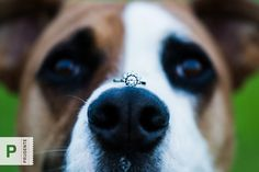 If Fido can sit still this would be an awesome Fun engagement photography with a pet!