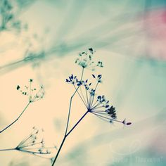 photographies de sophie thouvenin - vegetal