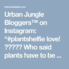 "Urban Jungle Bloggers™ on Instagram: ""#plantshelfie love! 🌿🌱🍀🌴🌵 Who said plants have to be green? Tradescantia pallida (purple heart plant), Begonia rex or Tradescantia zebrina…"""