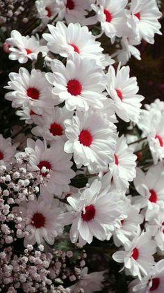 Beautiful Flowers Wallpapers, Beautiful Rose Flowers, Beautiful Nature Wallpaper, Exotic Flowers, Amazing Flowers, Pretty Flowers, Beautiful Gardens, Beautiful Pictures Of Flowers, White Flowers