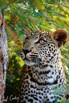 Nthombi's boy being a perfect model...behind a branch, but still :)