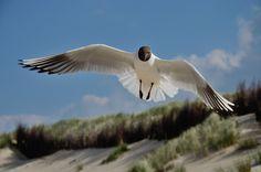 Birds In Flight, Animals, Animales, Flying Birds, Animaux, Animal, Animais