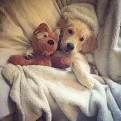 @thefemaleboook me as a dog owner