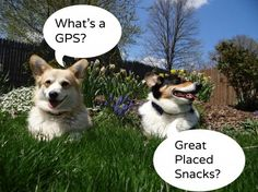 Corgi Comics September Roundup and Outtakes