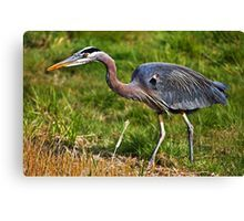 This blue heron #bird has a patch of feathers that looks like a bald eagle tat. Get canvas prints for wall #decor of this wildlife for your home.  Visit now