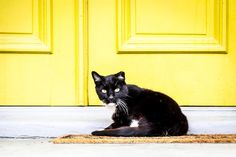 Some cats are better at color coordinating than others . . . . . #PhotoClassWalkabout #portsmouth #oldtown #loveVa #visitVa #757collective #virginiacities #vapilot #lensblur #teamcanon #canon_photos #canonphotography #canon1dxmarkii #natgeoyourshot #decisivemoment #picoftheday #natgeo #nationalgeographic #cityphotog