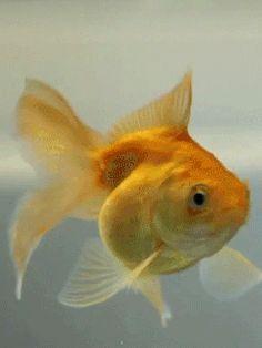This is my buddy, a-fib. Pretty Gif, Beautiful Gif, Gif Pictures, Images Gif, Google Gif, Fish Gif, Cute Small Animals, Fauna Marina, Fishing World