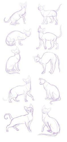 cats S2 creature