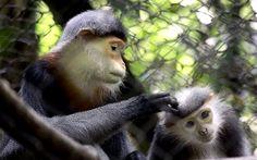 Cuc Phuong Nationalpark- das Haus der wilden Tieren- #AsiaticaReisen