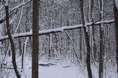 Sandrington Park - So I Was Thinking Sun Dogs, Forest Trail, Landscape Photography, Wildlife, Snow, Rustic, Explore, Park, Nature