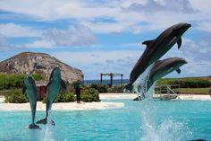Exploring Oahu With Kids - Sea Life Park