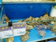 #Turtles and  #frogs. #Yum,  Yum!!    #Wal-Mart, #bizarre, #unusal, #different, #shopping, #retail, #weird