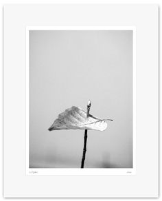 Fine Art Print, Black and White Photography - Archival Print - Mounted, Limited Edition, Contemporary Wall Art - Wood - Bosco #09 by Muteimage on Etsy