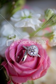 Wedding rings in a pink rose Royalty Free Stock Photo