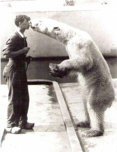ijsbeerkus blijdorp rdam