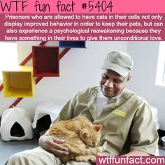 Cats improve the behavior of prison inmates - Faith In Humanity Restored! ~WTF awesome fun facts -- By the power of kitties Crazy Animal Facts, Crazy Facts, Cat Memes, Funny Memes, Funny Gifs, Videos Funny, Wtf Fun Facts, Random Facts, Funny Facts