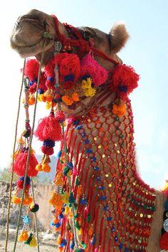 Zet een kwast On It: Bright kleurrijke Camel Swag Pom Pom, kwast, decoratie, Boheemse, Gypsy Fashion Design leveren, kies uw kleur, 1 pc.  Alles in het leven wordt beter met pom poms en kwastjes. Voor zover ik bezorgd, anyway ben. Deze neon-kerstballen worden gebruikt als decoraties van de kameel in Rajasthan, India. Hebt u een kameel, verdient hij/zij ook worden uitgedost! Hebt u niet van een kameel, ben ik zeker dat je kunt bedenken op talloze manieren om opvrolijken uw projecten en uw…
