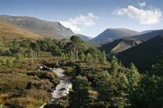 cairngorms national park - Bing Images