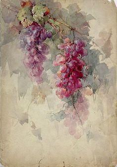 Franz Aulich Grape Watercolor