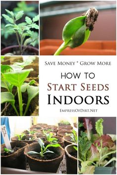 How to start seeds indoors - save money and grow whatever you like! See these frugal tips for starting fruit, vegetables, flowering annuals and perennials for your home garden. Garden Seeds, Planting Seeds, Gardening For Beginners, Gardening Tips, Starting Seeds Indoors, Home Vegetable Garden, Veggie Gardens, Growing Seeds, Growing Plants