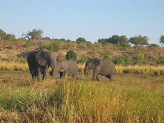 ProdAfrica Business Directory connecting Europe and Africa Game Reserve, Biomes, Hot Springs, Mammals, Tourism, Waterfall, National Parks, Scenery, Wildlife