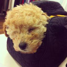 Sleeping in my bag
