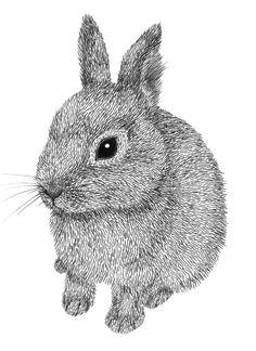 various things. rabbit drawing, rabbit art y ra Rabbit Drawing, Rabbit Art, Rabbit Illustration, Illustration Art, Animals Tumblr, Animal Drawings, Art Drawings, Bunny Painting, Stippling Art