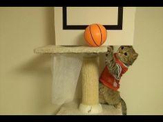 バスケをする猫達 ダンクとゴールを決める Cats Playing Basket ball get a goal and Dunk