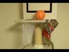 Video of the Day - Cats playing basketball. These adorable cats will slam dunk their way into your heart! http://moderncat.com/articles/video-day-cats-playing-basketball/67786