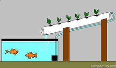 """How to make your own Aquaponics System - Affordable and Easy Method """"Break-Through Organic Gardening Secret Grows You Up To 10 Times The Plants, In Half The Time, With Healthier Plants, While the """"Fish"""" Do All the Work. Aquaponics System, Aquaponics Greenhouse, Aquaponics Fish, Hydroponic Gardening, Organic Gardening, Fish Farming, Urban Gardening, Organic Farming, Vegetable Gardening"""